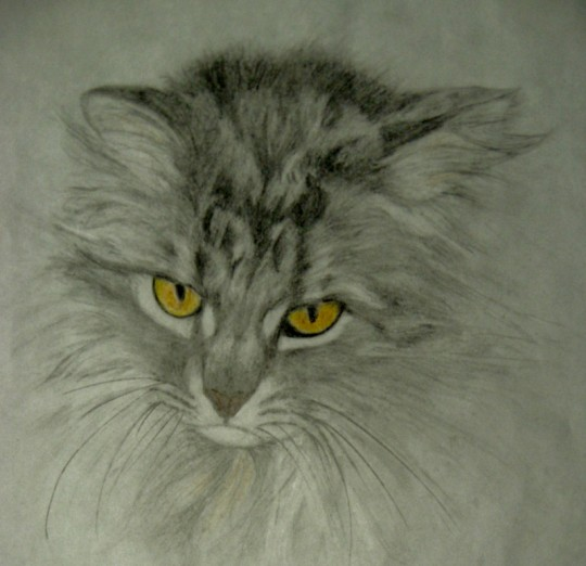 Hermoine the Cat painting