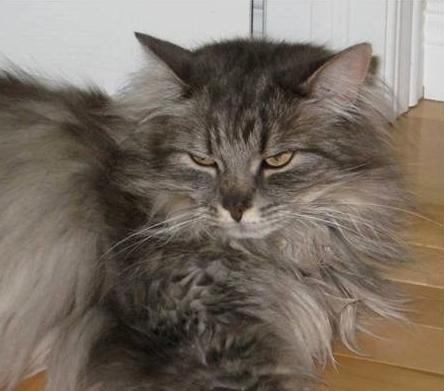 Hermoine the Cat